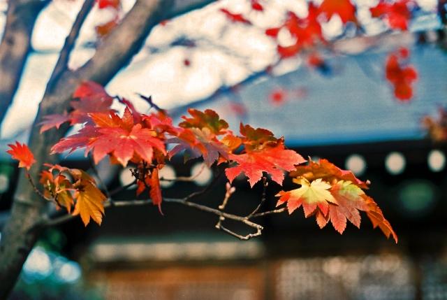 東福寺の紅葉の見頃は?混雑する?ライトアップはある?
