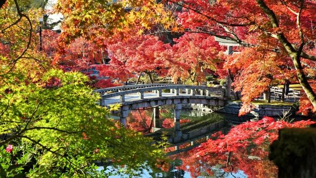 京都の紅葉の見どころは?名所やライトアップでおすすめは?
