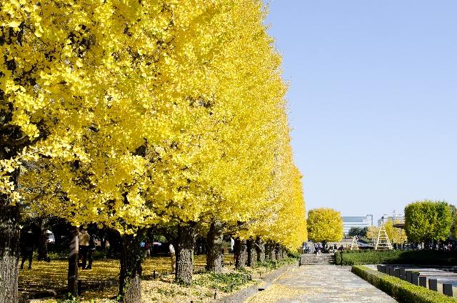 昭和記念公園の紅葉デートはどう?見頃は?駐車場はある?