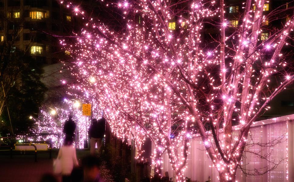 目黒川イルミネーションの2015年の予定は?クリスマスデートは?イルミネーション近くのおすすめレストランは?