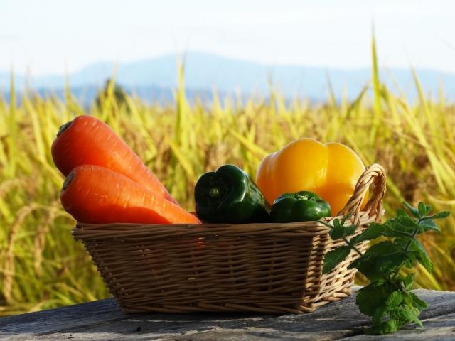 食生活の改善で簡単な方法はある?アプリは?効果が出るにはどれくらいの期間必要?
